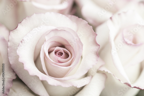 jasnorozowe-roze
