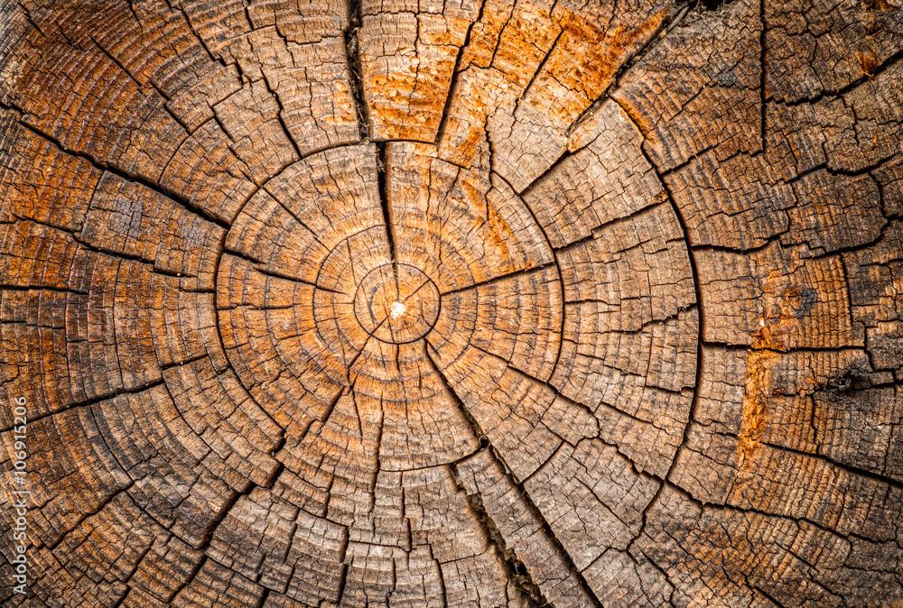 Fototapety, obrazy: Old weathered spruce tree trunk