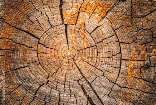 Obraz Old weathered spruce tree trunk - fototapety do salonu