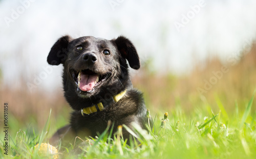 Happy adopted mixed breed dog in garden Wallpaper Mural