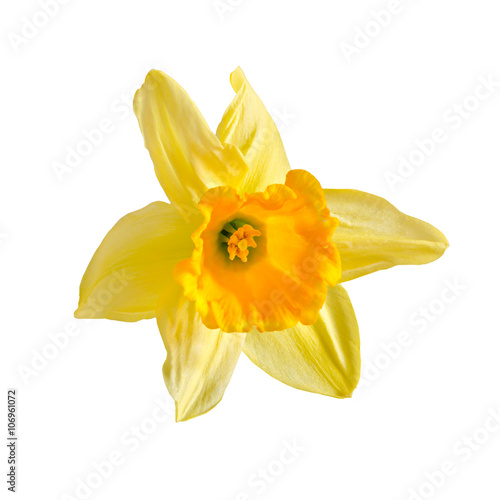 Deurstickers Narcis Yellow, orange daffodil flower, narcissus, close up, white background