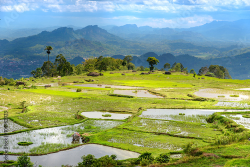 Fotobehang Rijstvelden Green rice field in Tana Toraja