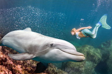Fototapeta Delfin dolphin underwater meets a blonde mermaid