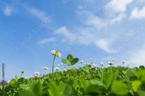 Valokuva  四つ葉のクローバーと青空