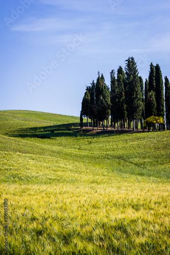 Staande foto Meloen Tuscany, landscape