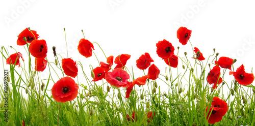 Obrazy wieloczęściowe czerwone kwiaty na białym tle