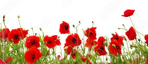 Foto op Canvas Klaprozen red poppies on white