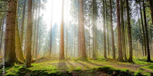 Photo  Naturpark – Wald mit Sonnenstrahlen
