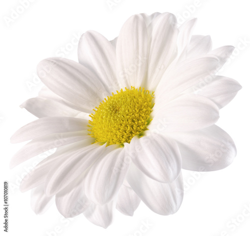 Staande foto Madeliefjes daisy isolated on the white background