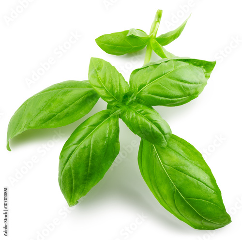 Fotografía  basil leaves isolated on the white background