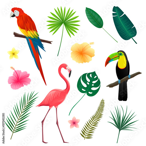 Vector Illustration of Tropical Leaves, Flowers and Birds