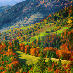 Obraz na Plexithe mountain autumn landscape with colorful forest