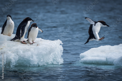 Spoed Foto op Canvas Antarctica Adelie penguin jumping between two ice floes