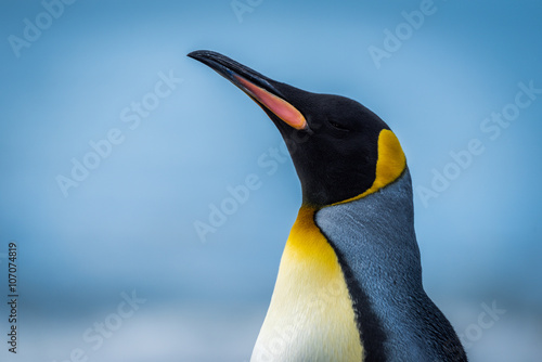 Foto op Canvas Pinguin Close-up of king penguin with sea behind