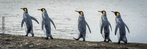 Papiers peints Pingouin Five king penguins in line on beach