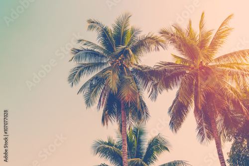 Tuinposter Bomen Coconut palm tree with vintage effect.