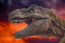 Dinosaur Trex Close Up On Inferno Background