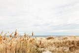 Ostseestrand auf Öland in Schweden - 107088833