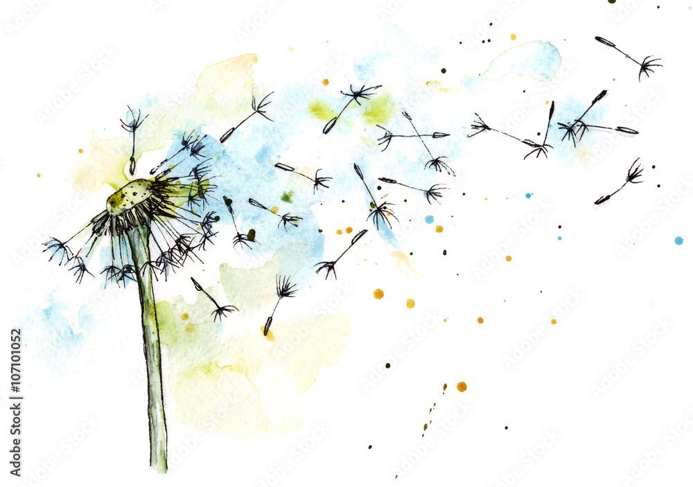 Fototapety, obrazy: Dandelion watercolor botanical illustration