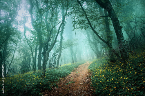 Road through a mysterious dark forest in fog with green leaves a