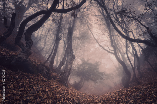 Papiers peints Forets Autumn forest in fog. Beautiful natural landscape. Vintage style