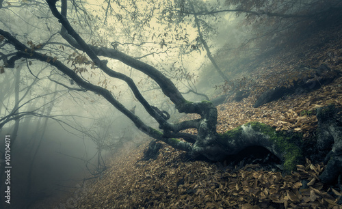 Staande foto Olijf Autumn forest in fog. Beautiful natural landscape. Vintage style