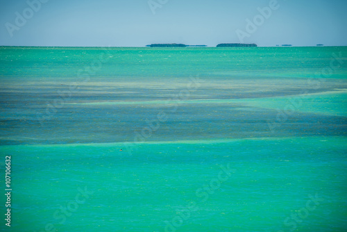 Fotografie, Obraz  tranquil nature in florida keys