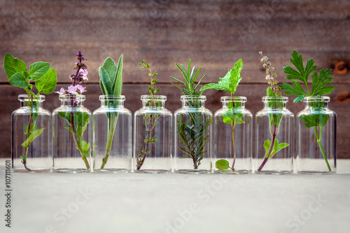 Bottle of essential oil with herbs holy basil flower, basil flow Wallpaper Mural