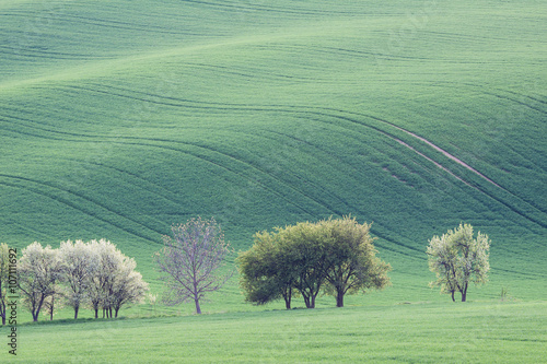 Foto op Canvas Olijf Countryside green farmland landscape