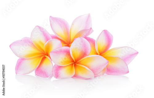 Foto op Canvas Frangipani frangipani flowers on white background