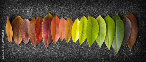 Foto  chromatic scale made of leaves