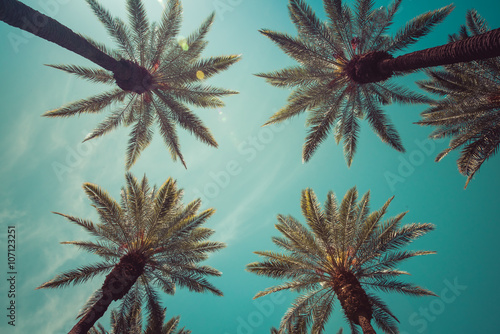 Fotografie, Obraz  Vintage Beverly Hills, Hollywood captivating Palm Trees overhead shot