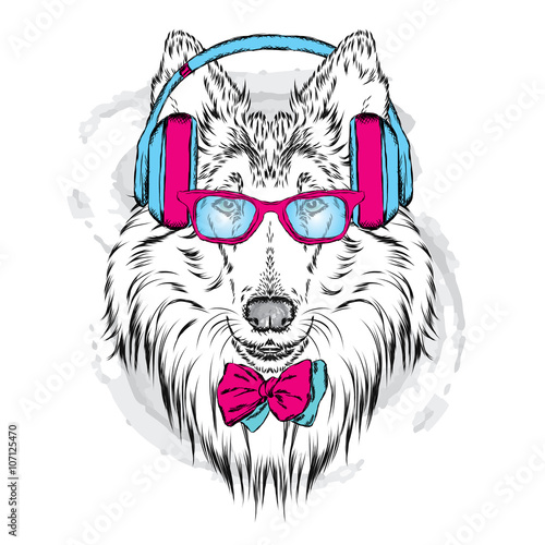 Poster Croquis dessinés à la main des animaux Pedigree dogs painted by hand. Collie wearing headphones and sunglasses. Vector illustration.