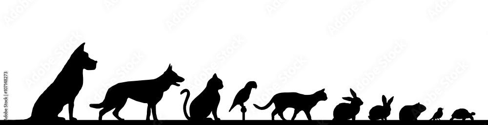 Fototapeta Silhouette Haustiere - Hund, Katze, Vogel u.a.