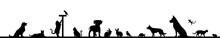 Silhouette Haustiere - Hund, K...