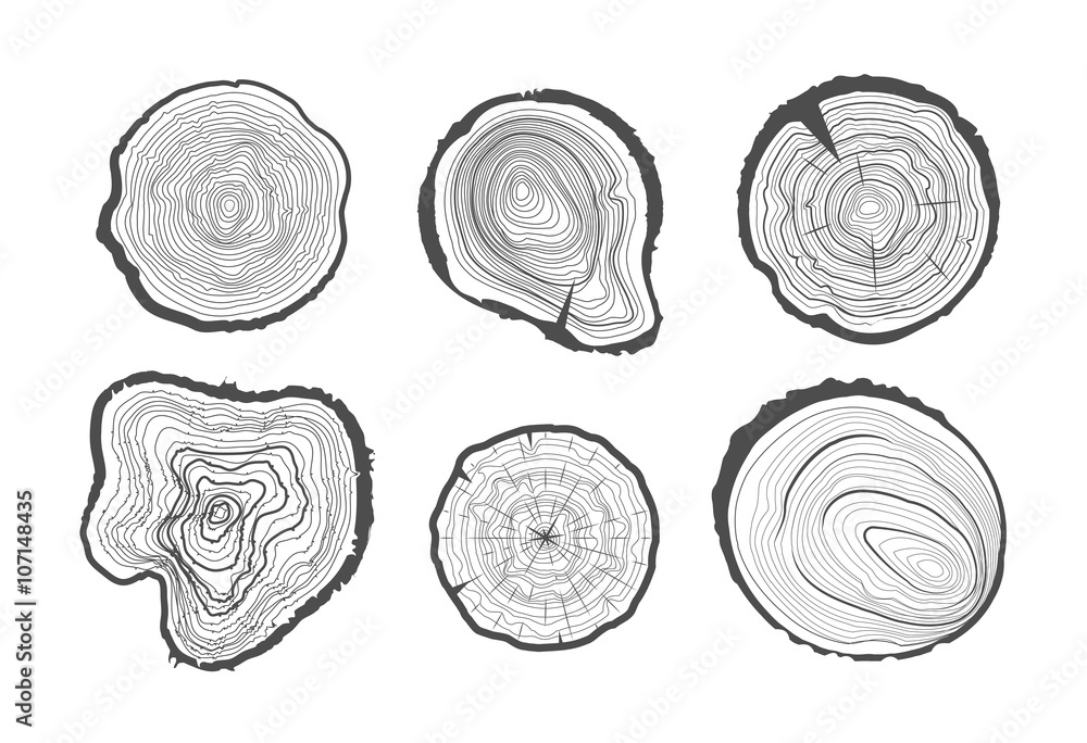 Fototapety, obrazy: Collection of tree-rings. Vector graphics.