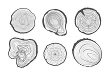 Collection Of Tree-rings. Vect...