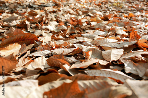 Canvas Print Dry leaves on the ground.