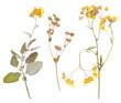 Leinwanddruck Bild - Set of wild dry pressed flowers and leaves