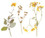 Set of wild dry pressed flowers and leaves - 107156270