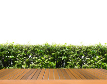 Wooden Floor With Shrubbery,