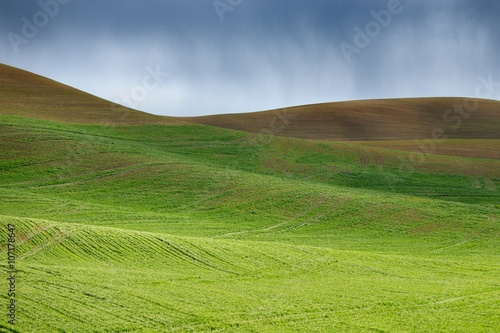 Foto auf Gartenposter Hugel Growing wheat at the rolling hills farmland and rain. Palouse Hills in Washington, United State of America.