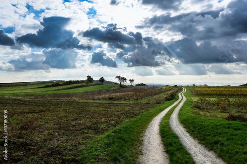 obraz PCV Weg durch Landschaft mit Weingarten im Herbst