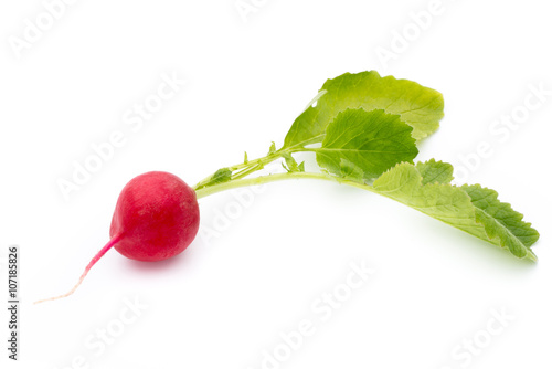 Radish fresh isolated on white background.