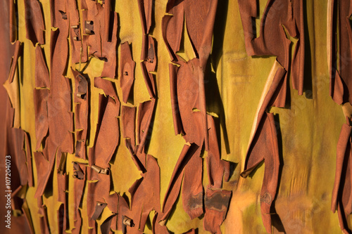 Peeling arbutus bark Wallpaper Mural