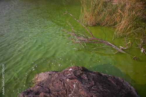 Fotografia, Obraz  Cyanobacteria in Taihu lake