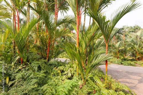 Photo  Red Lipstick Rajah Palm Trees