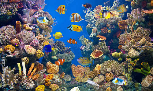 Foto Colorful and vibrant aquarium life