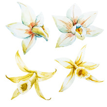Watercolor White And Yellow Orchids