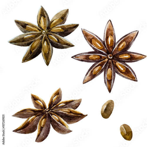 Photo Watercolor hand drawn spice anise